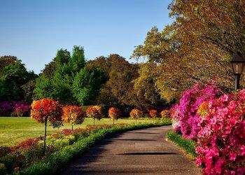 tuin landschap
